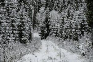 #snødekket #vei