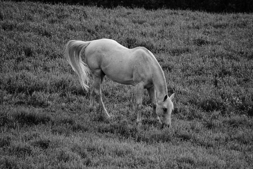 hest på beite