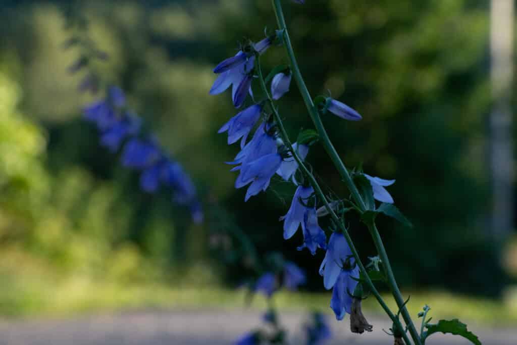 Gleden over naturen og hva den inneholder har alltid vært vår greie.